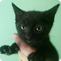 Adopt A Pet :: Prince - Savannah, GA