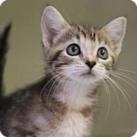 Adopt A Pet :: WENDY - Red Bluff, CA