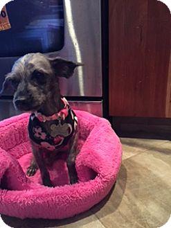 Terrier (Unknown Type, Medium) Dog for adoption in N. Babylon, New York - Kenzie