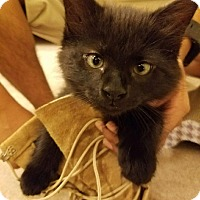 Adopt A Pet :: Ady (COURTESY POST) - Baltimore, MD