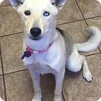 Adopt A Pet :: Nikki 110821 - Joplin, MO