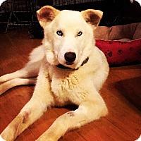 Adopt A Pet :: Aspen - joliet, IL