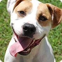 Adopt A Pet :: Ruger - Garner, NC