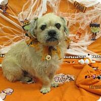 Adopt A Pet :: A077359 - Grovetown, GA