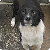 Adopt A Pet :: Pya - Sugar Grove, IL