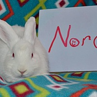Adopt A Pet :: Nora - Erie, PA