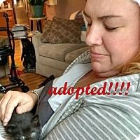 Adopt A Pet :: Ripley - Rochester Hills, MI