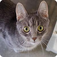 Adopt A Pet :: Keke - Greenwood, SC