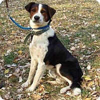 Adopt A Pet :: Champ - Plainfield, CT