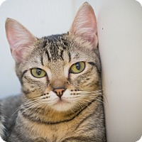 Adopt A Pet :: Gazelle - Los Angeles, CA