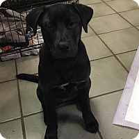 Adopt A Pet :: Dolce - Mary Esther, FL