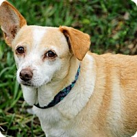 Adopt A Pet :: Janie - New Smyrna beach, FL
