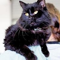 Adopt A Pet :: PIRATE - Pt. Richmond, CA