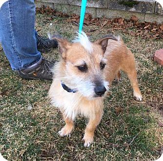 Rhode Island Small Dog Rescue