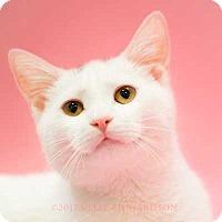 Adopt A Pet :: Glenn Baby Boy - Oviedo, FL