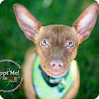 Adopt A Pet :: Liam - Myersville, MD