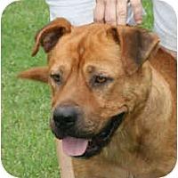 Adopt A Pet :: Li'l Halo - kennebunkport, ME