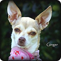 Adopt A Pet :: Ginger - Vista, CA
