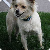 Adopt A Pet :: Peanut - Broomfield, CO