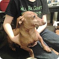 Adopt A Pet :: Macy - Upper Sandusky, OH