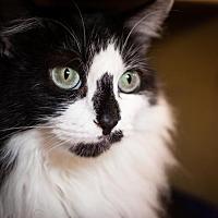 Adopt A Pet :: Zumba - Cary, NC