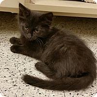 Adopt A Pet :: Java - Phoenix, AZ