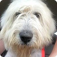 Adopt A Pet :: Arthur in PA - pending - Beacon, NY
