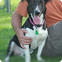 Adopt A Pet :: Pepper - Knoxville, TN