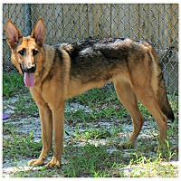 Adopt A Pet :: Linden - Forked River, NJ