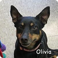 Adopt A Pet :: Olivia - Warren, PA