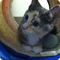 Adopt A Pet :: Fayette - Trevose, PA