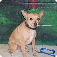 Adopt A Pet :: Sonny - Bellbrook, OH