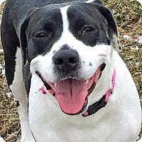 Adopt A Pet :: Leela Ledbetter - Troy, MI