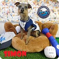 Adopt A Pet :: Simon - Arcadia, FL