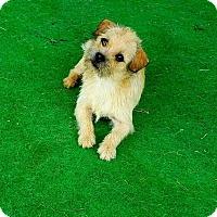 Adopt A Pet :: Skippy #2 - Graceville, FL