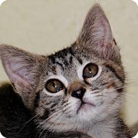 Adopt A Pet :: Tabitha - Salem, WV