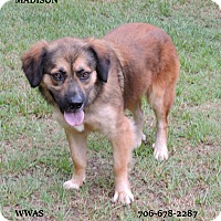 Adopt A Pet :: Maddison - Washington, GA