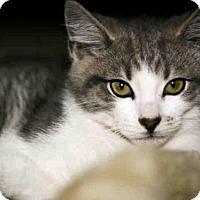 Adopt A Pet :: RAYLAN - Louisville, KY