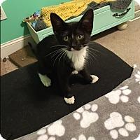 Adopt A Pet :: Stark - Homewood, AL
