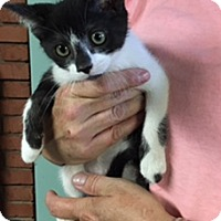 Adopt A Pet :: Astra - Troy, OH