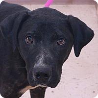 Adopt A Pet :: Griff - McDonough, GA