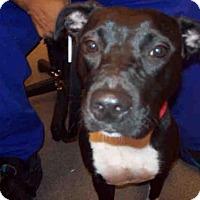 Adopt A Pet :: PRINCESS - Upper Marlboro, MD