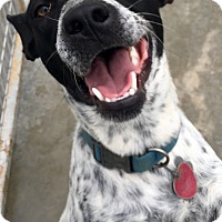 Adopt A Pet :: Feona - Woodward, OK