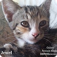 Adopt A Pet :: Jewel - Temecula, CA