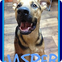 German Shepherd Dog Mix Dog for adoption in Sebec, Maine - JASPER