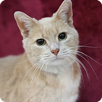 Domestic Shorthair Cat for adoption in Midland, Michigan - Warren - STRAY