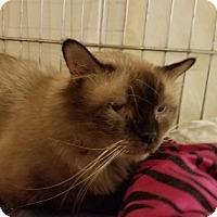 Adopt A Pet :: Ludwig - Tucson, AZ