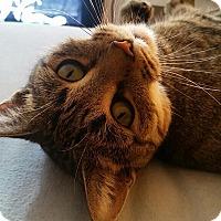 Adopt A Pet :: Hazel - New  York City, NY