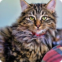 Adopt A Pet :: Murphy - Markham, ON
