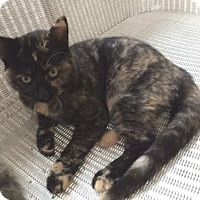 Adopt A Pet :: Bijou - Mobile, AL
